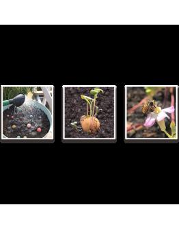 BLOSSOMBS - Weggeefcadeautje (met 3 Blossombs in sleeve)